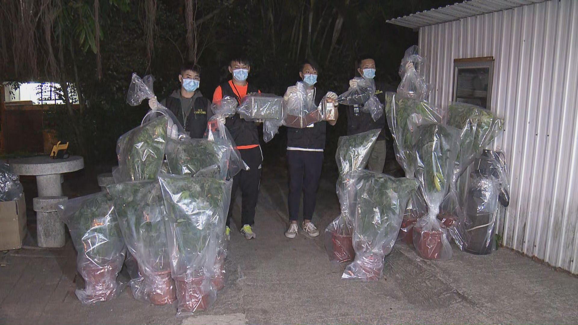 海關西貢村屋破大麻種植場拘一女