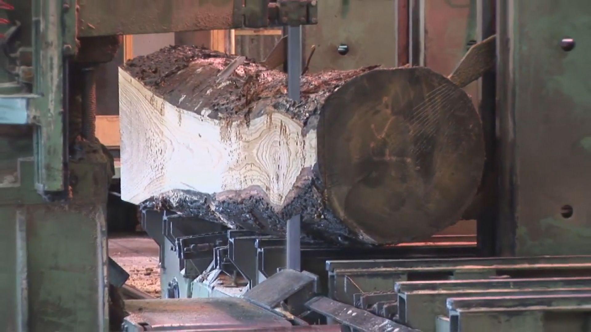 法國尋千棵百年橡樹重建巴黎聖母院 環保組織批不合時宜