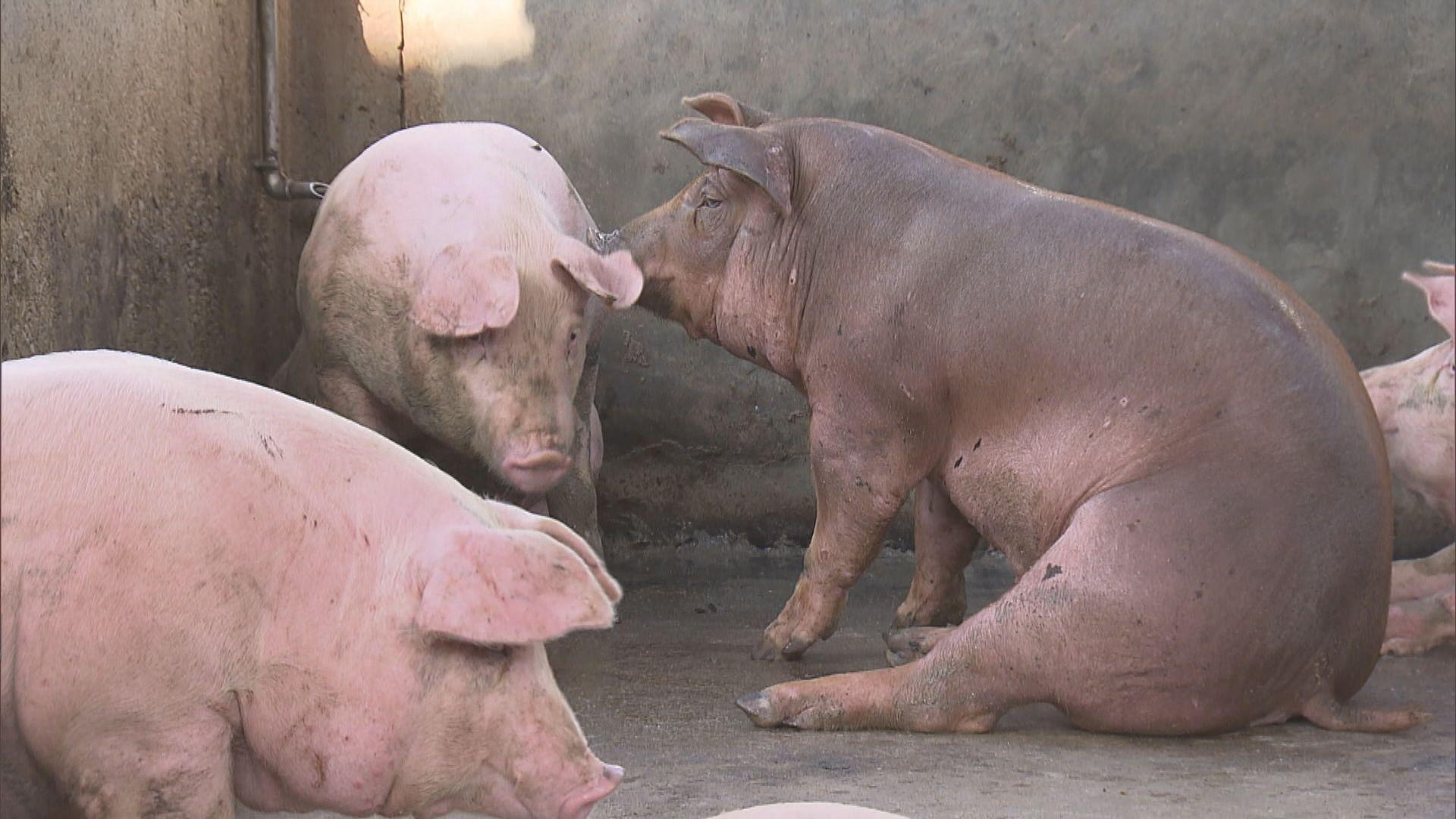 漁護署:已落實多項措施防範非洲豬瘟