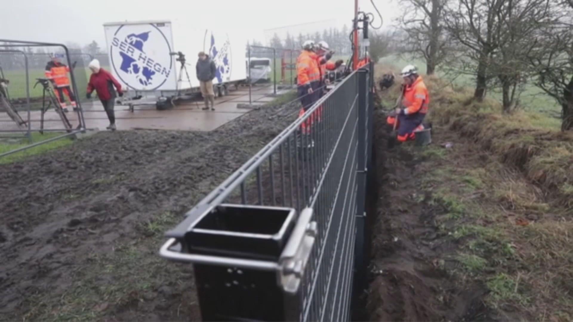 丹麥建圍牆防非洲豬瘟傳入