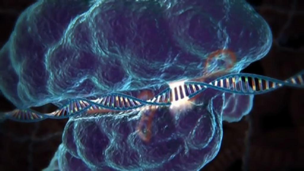 修復胚胎遺傳病基因引發道德爭議
