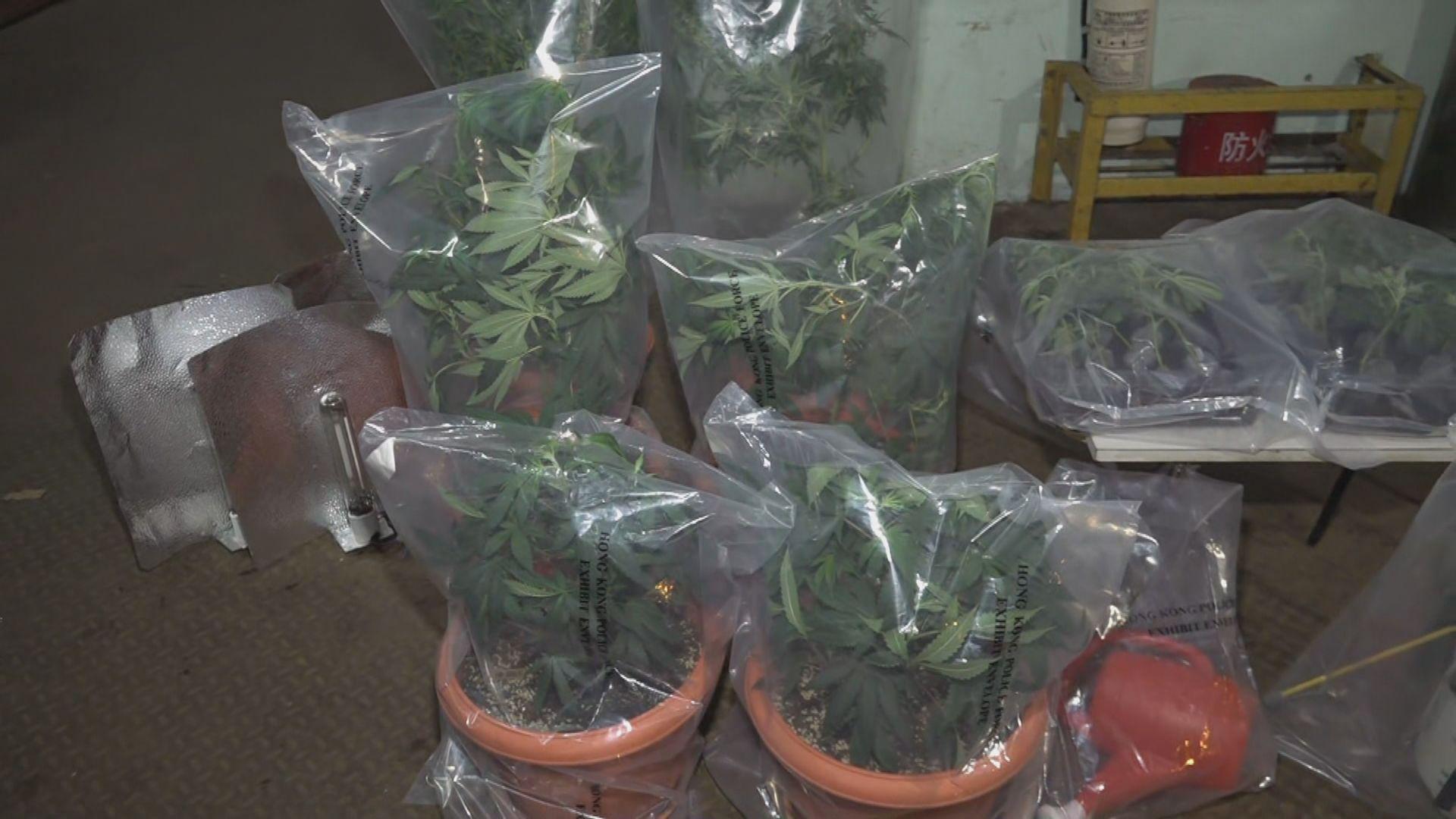 警方葵涌搗破一個懷疑大麻種植場 拘捕兩人