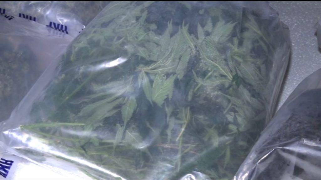 警破逾千萬元大麻種植場拘兩人