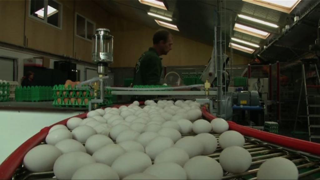 歐洲毒雞蛋蔓延至多國包括香港