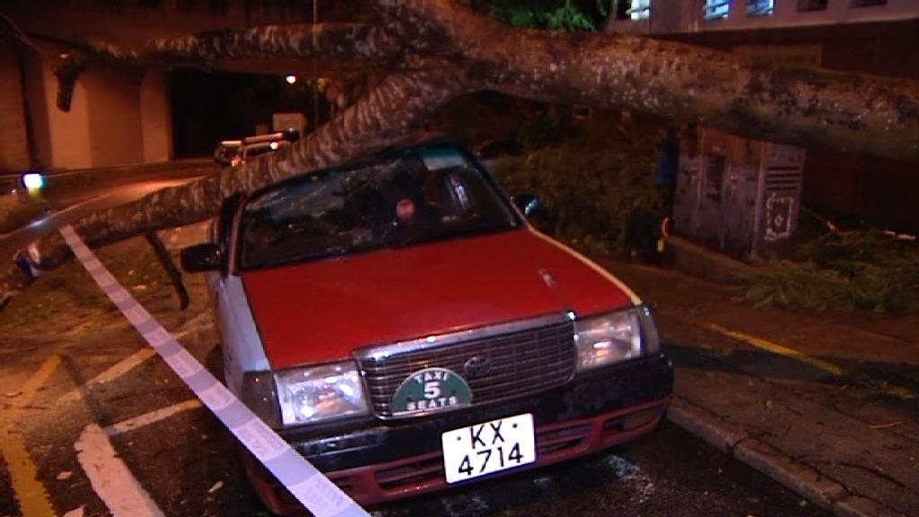 西貢大樹塌下壓毀的士無人傷