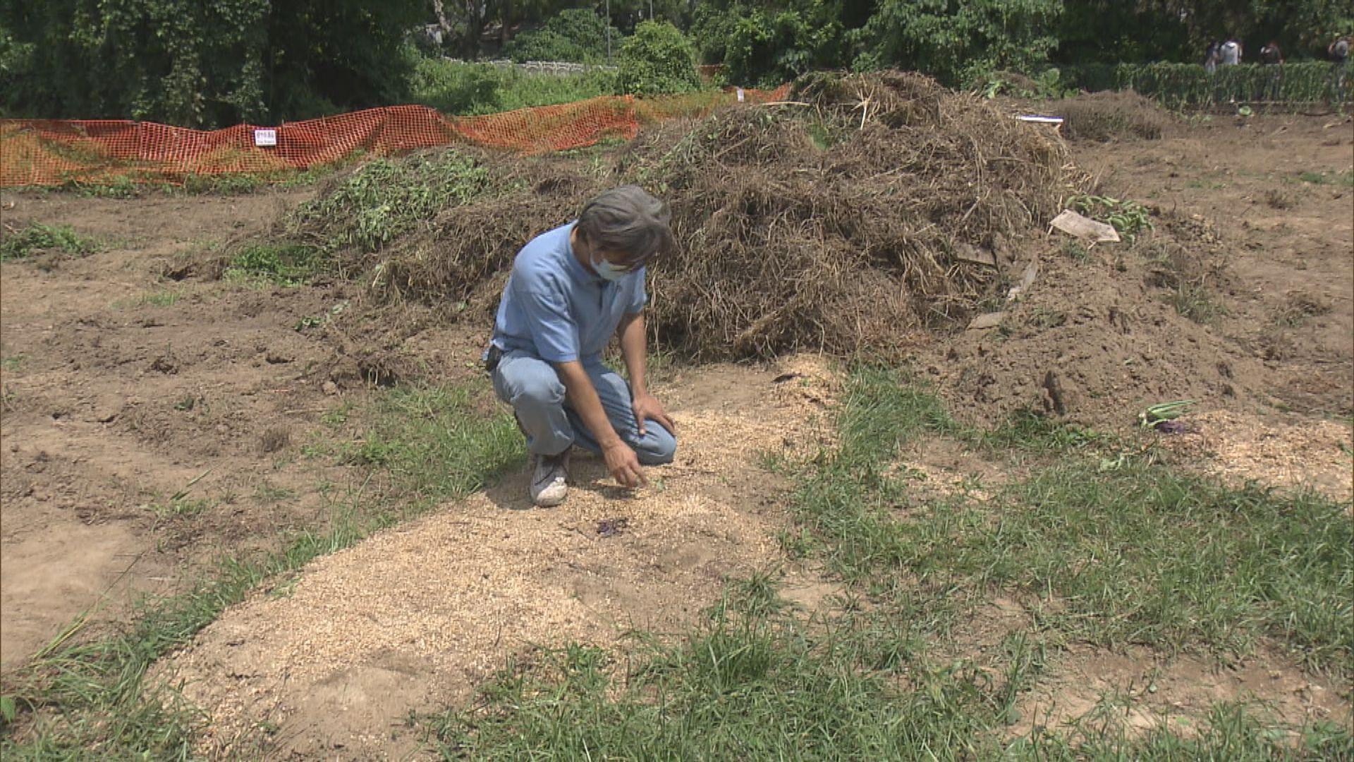 蕉徑農地突被剷走農作物 農戶批未達賠償共識收地粗暴