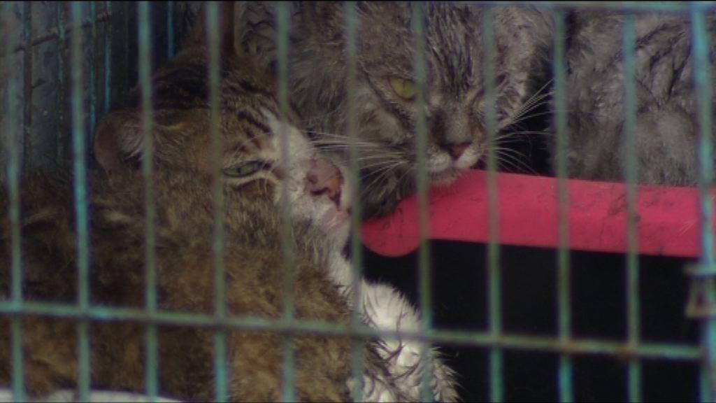 天水圍鐵皮屋火警 十多隻貓狗死亡