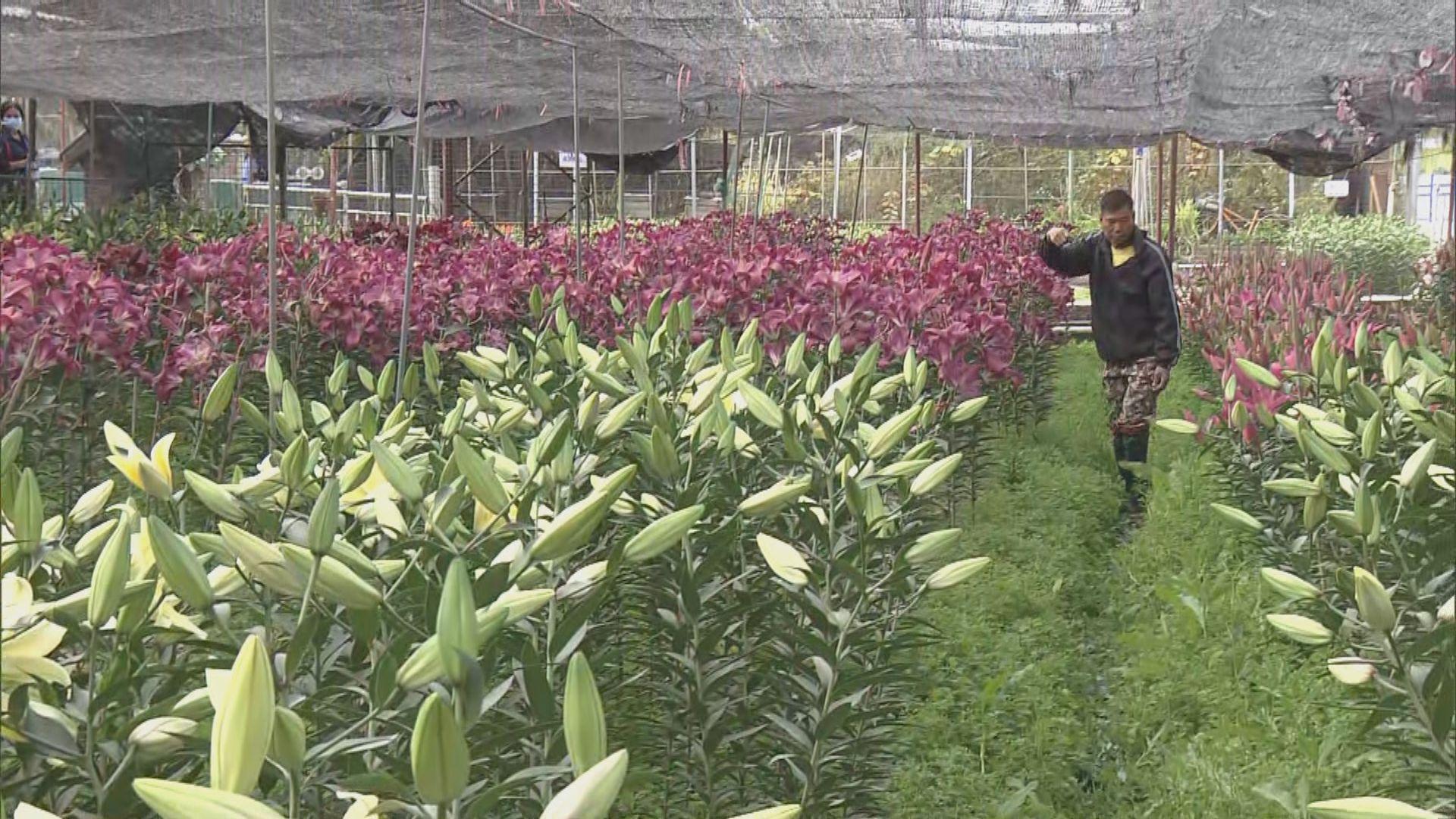 花市重開但批發市場仍取消 有花農批評政府安排混亂