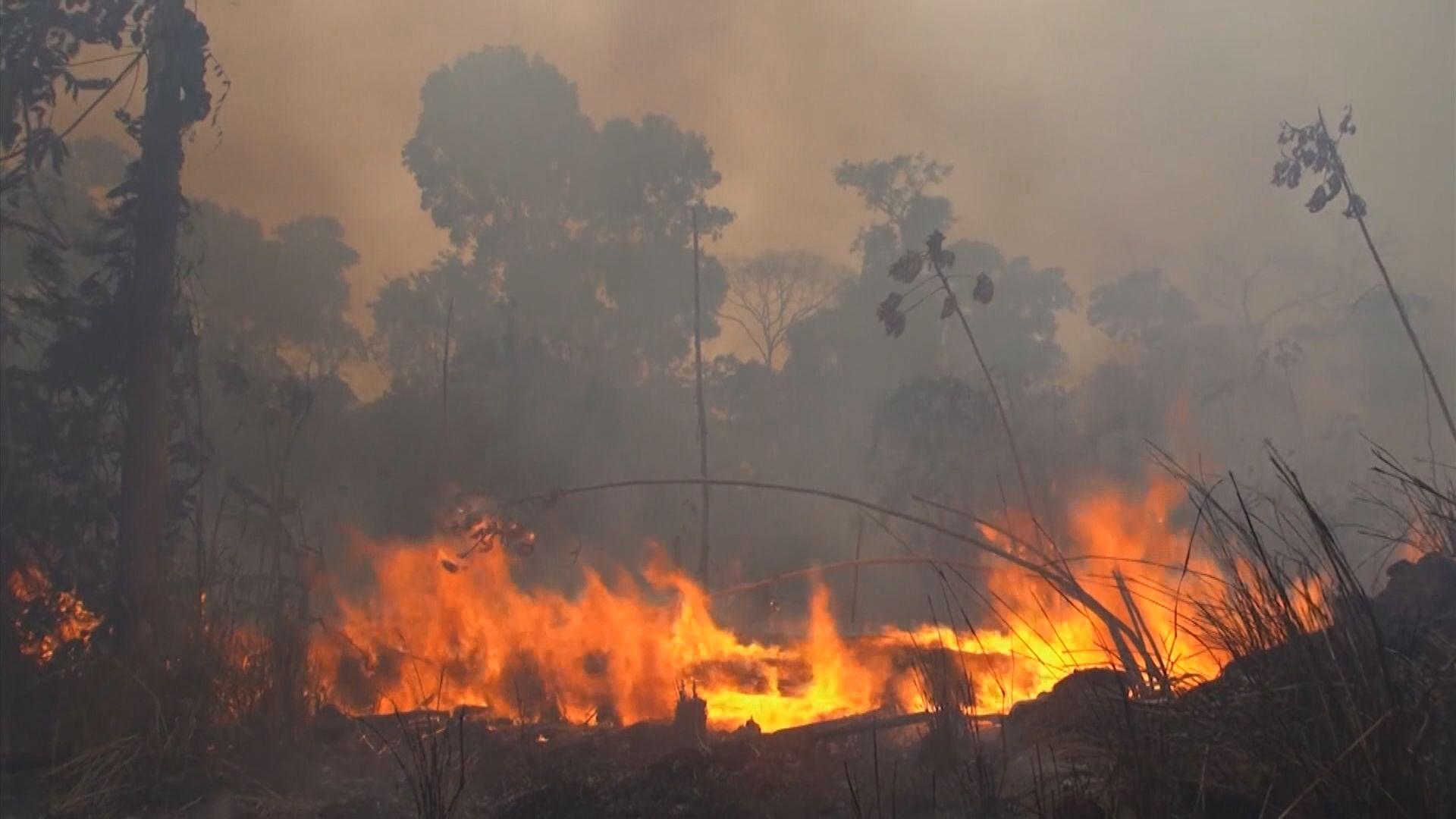 巴西州檢察人員調查環境部門忽視縱火警告