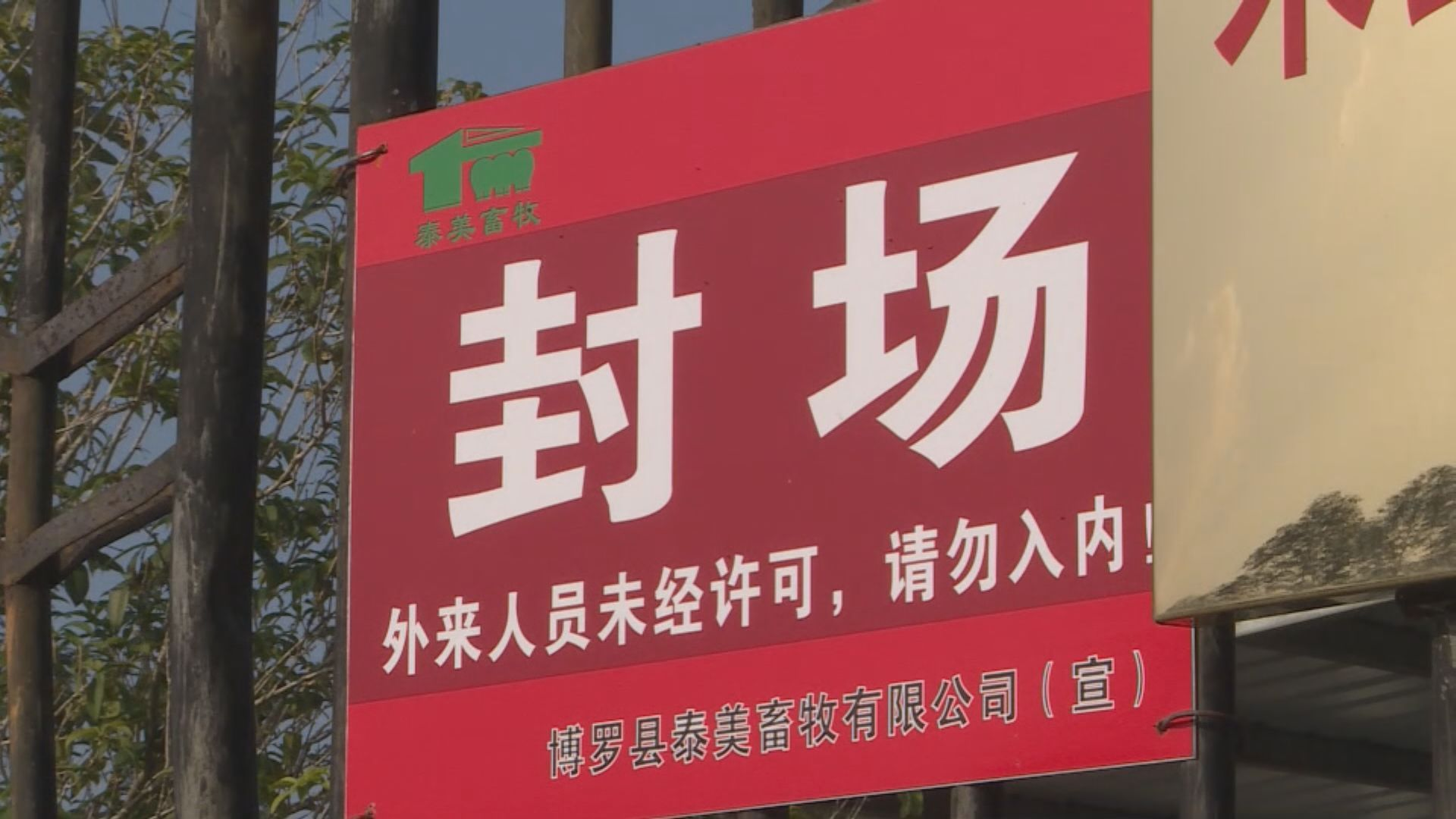 惠州市爆發非洲豬瘟 有養豬戶指損失慘重