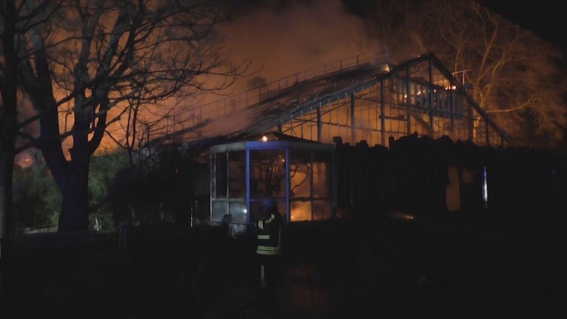 德國動物園大火逾30隻動物被燒死