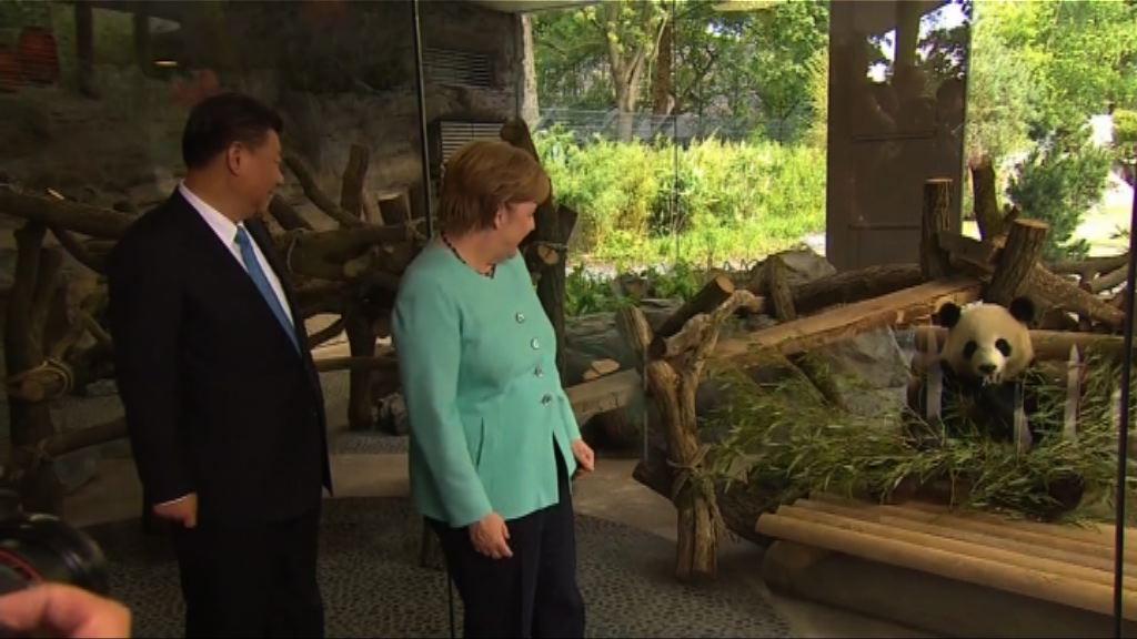 習近平柏林主持大熊貓館開館