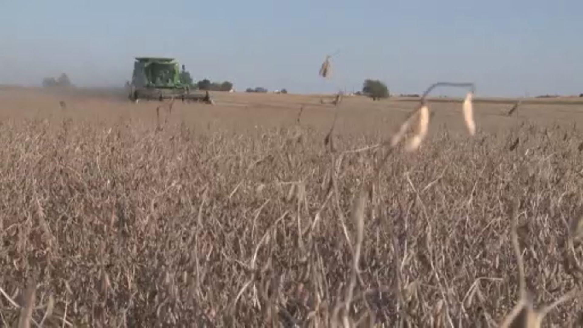【環球薈報】美軍方研究改變農作物基因惹疑慮