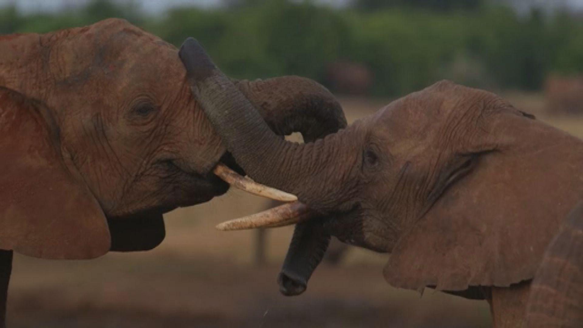 【環球薈報】人類過度開發令野生動物數量大減