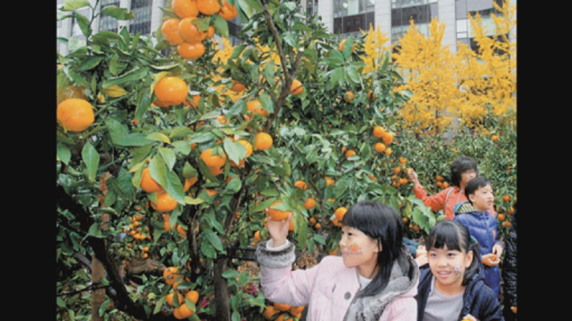 【環球薈報】南韓向北韓送濟州柑橘回禮