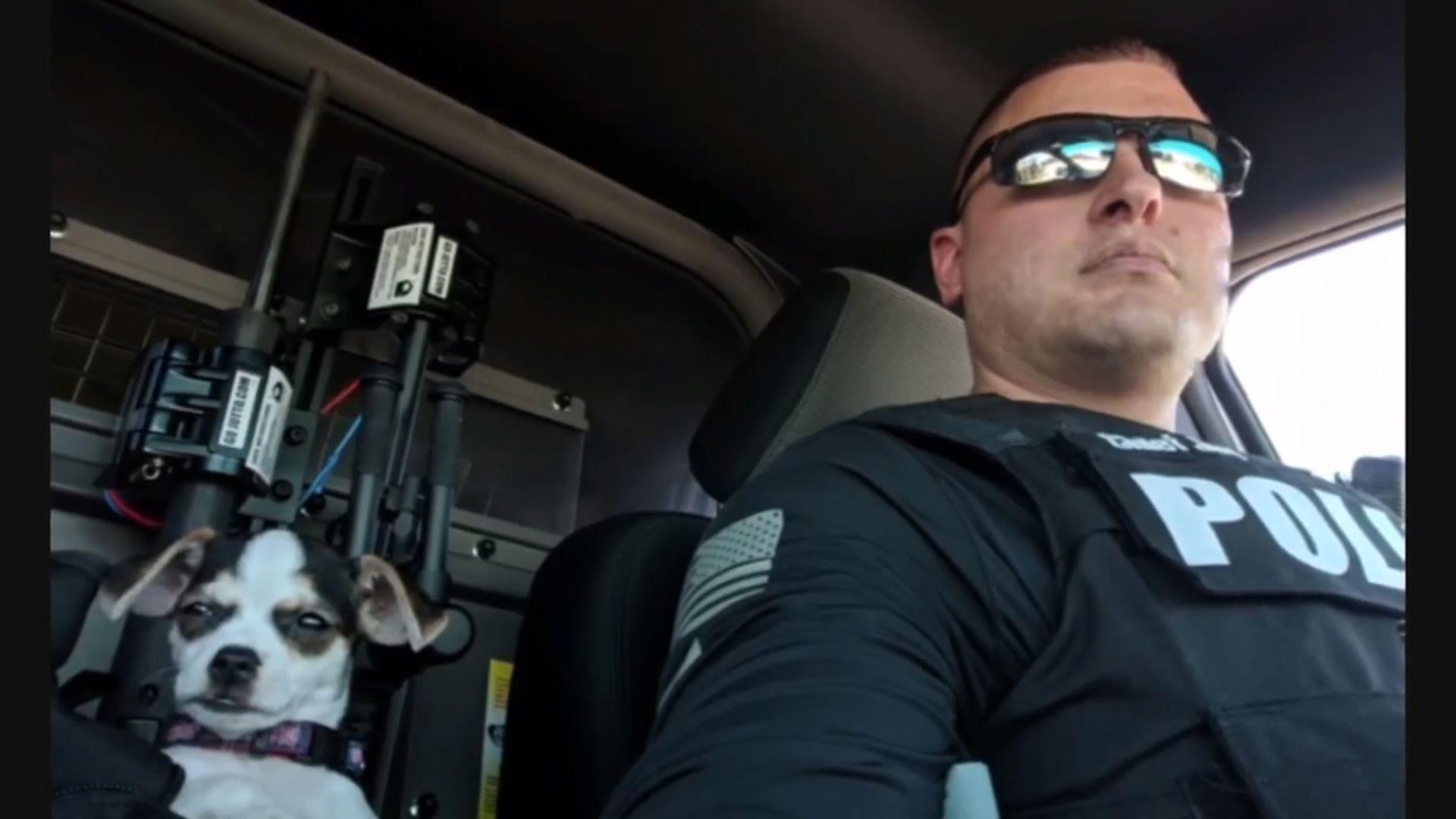 【環球薈報】美國獲救芝娃娃犬加入警隊