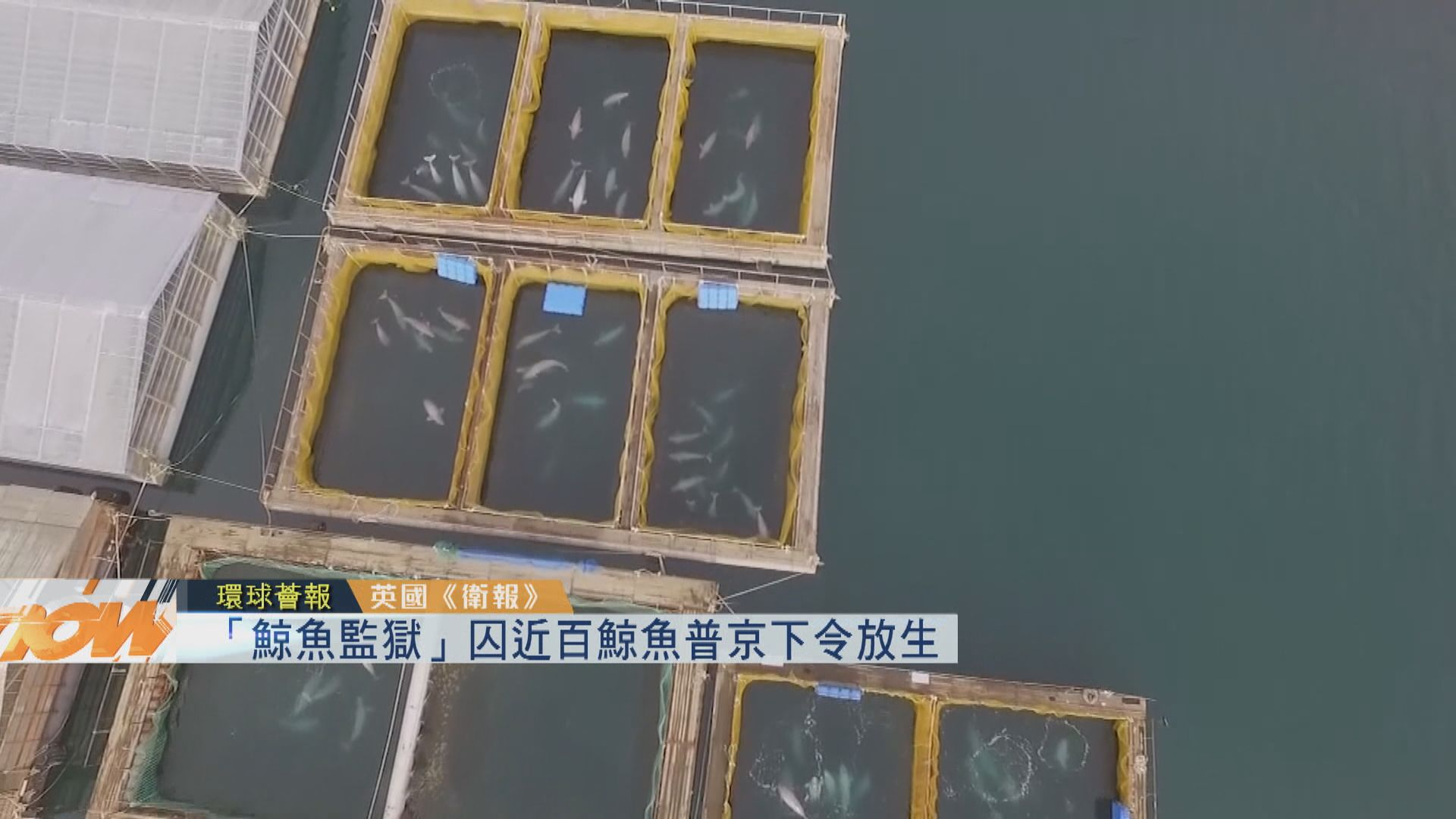 【環球薈報】「鯨魚監獄」囚近百鯨魚 普京下令放生