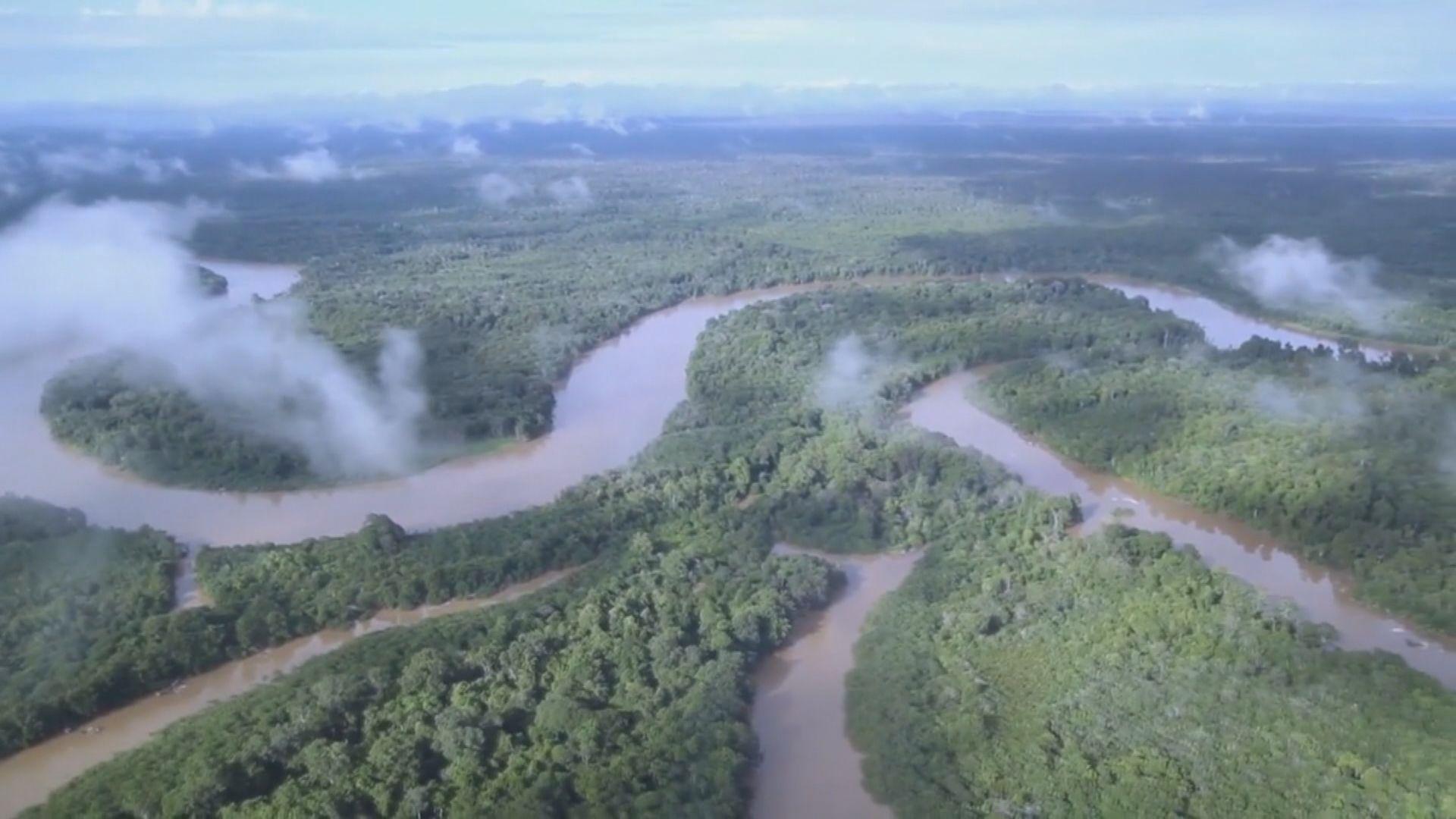 【環球薈報】全球去年損失千二萬公頃熱帶雨林