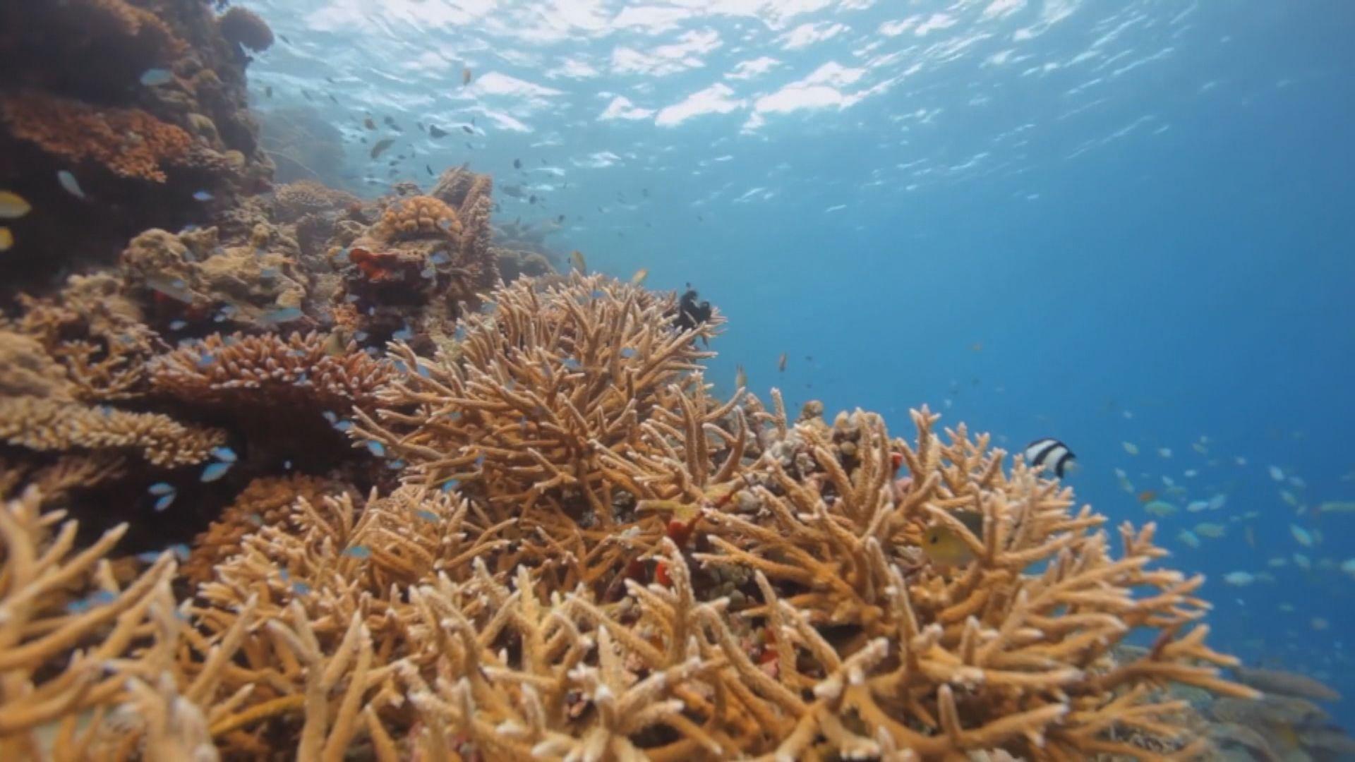 【環球薈報】澳洲科研機構移殖珊瑚幼蟲盼改善生態