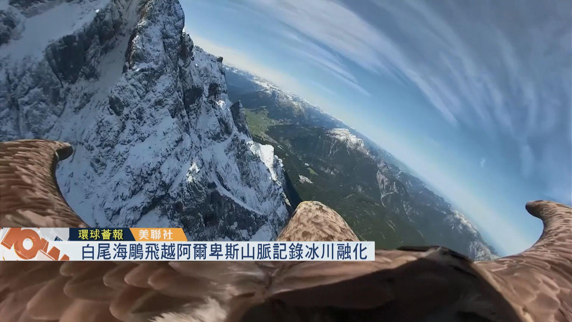 【環球薈報】白尾海鵰飛越阿爾卑斯山脈記錄冰川融化