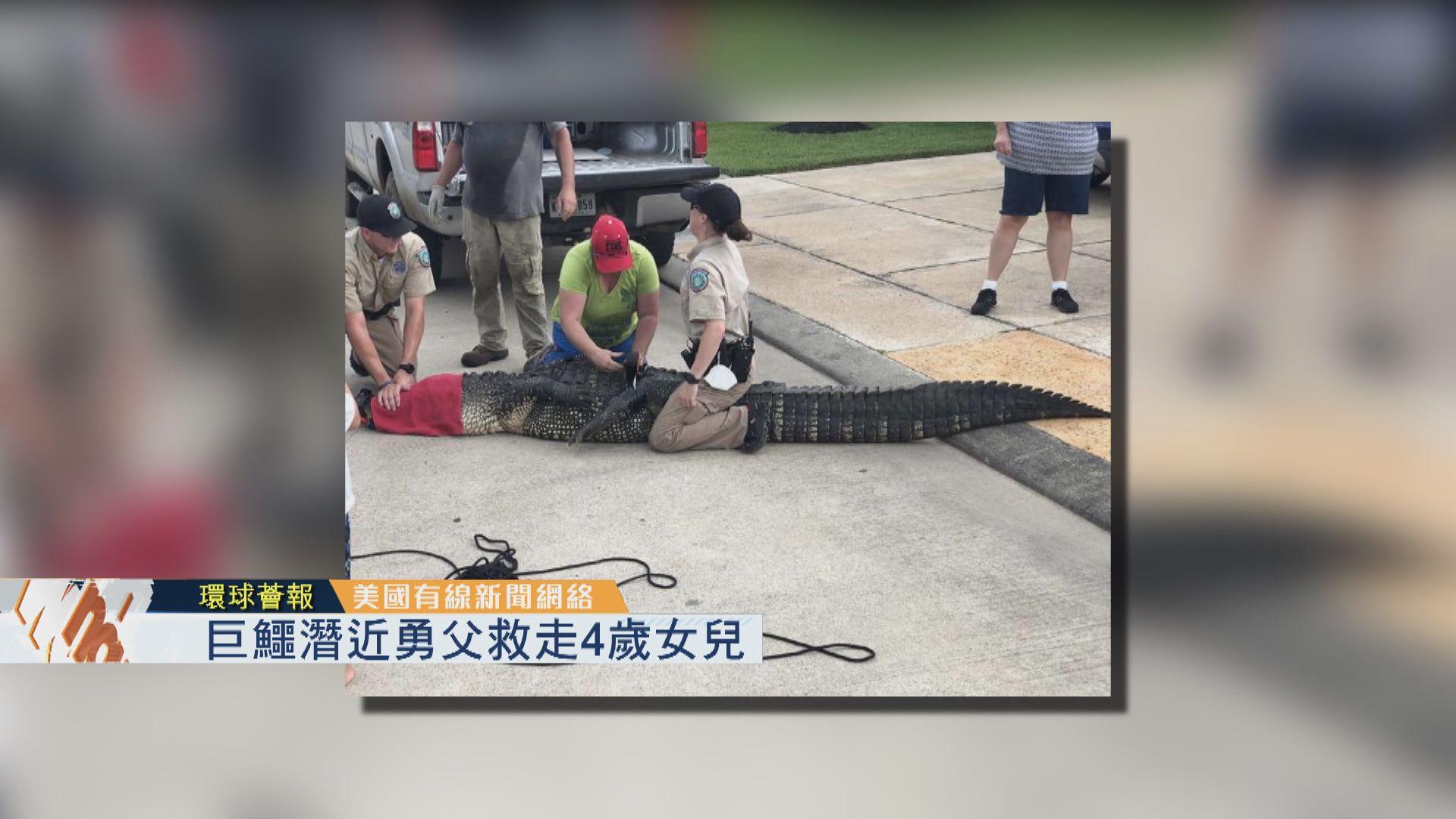 【環球薈報】巨鱷潛近勇父救走4歲女兒
