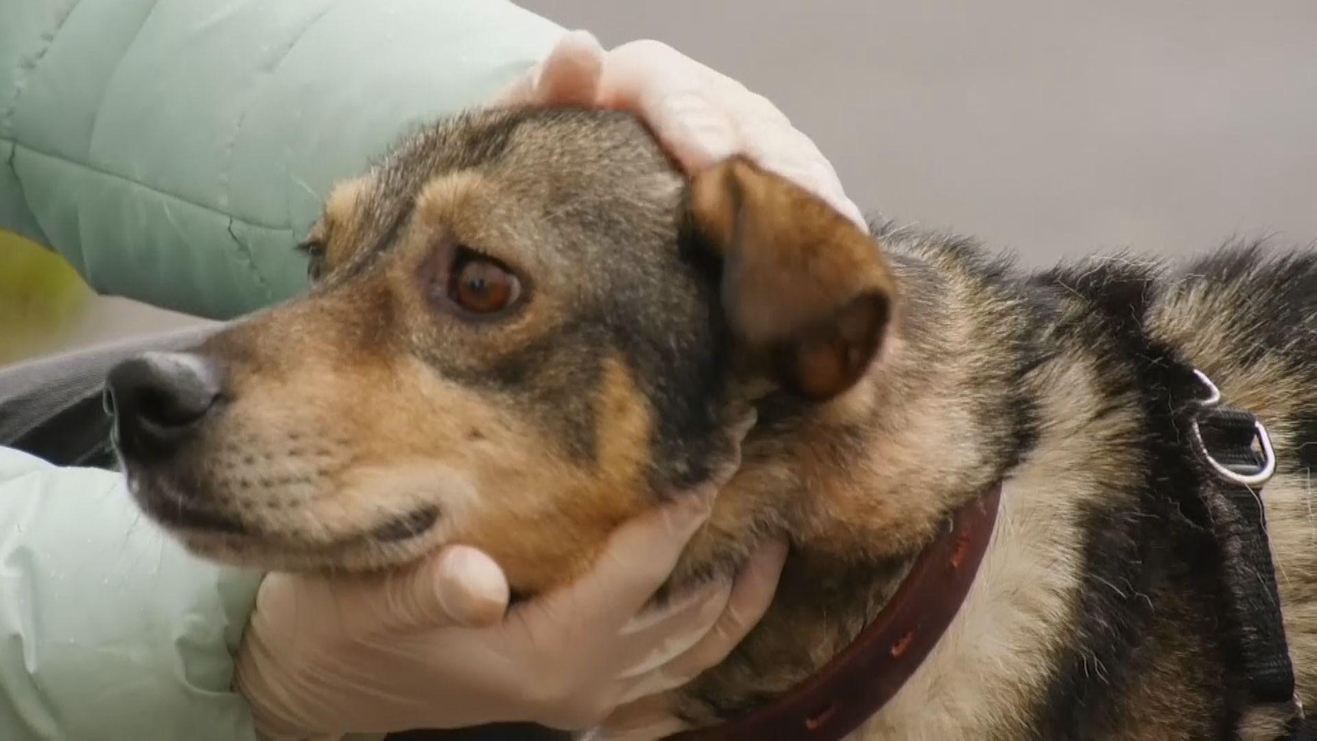 【環球薈報】研究指狗隻或不能分辨讀音相近單字