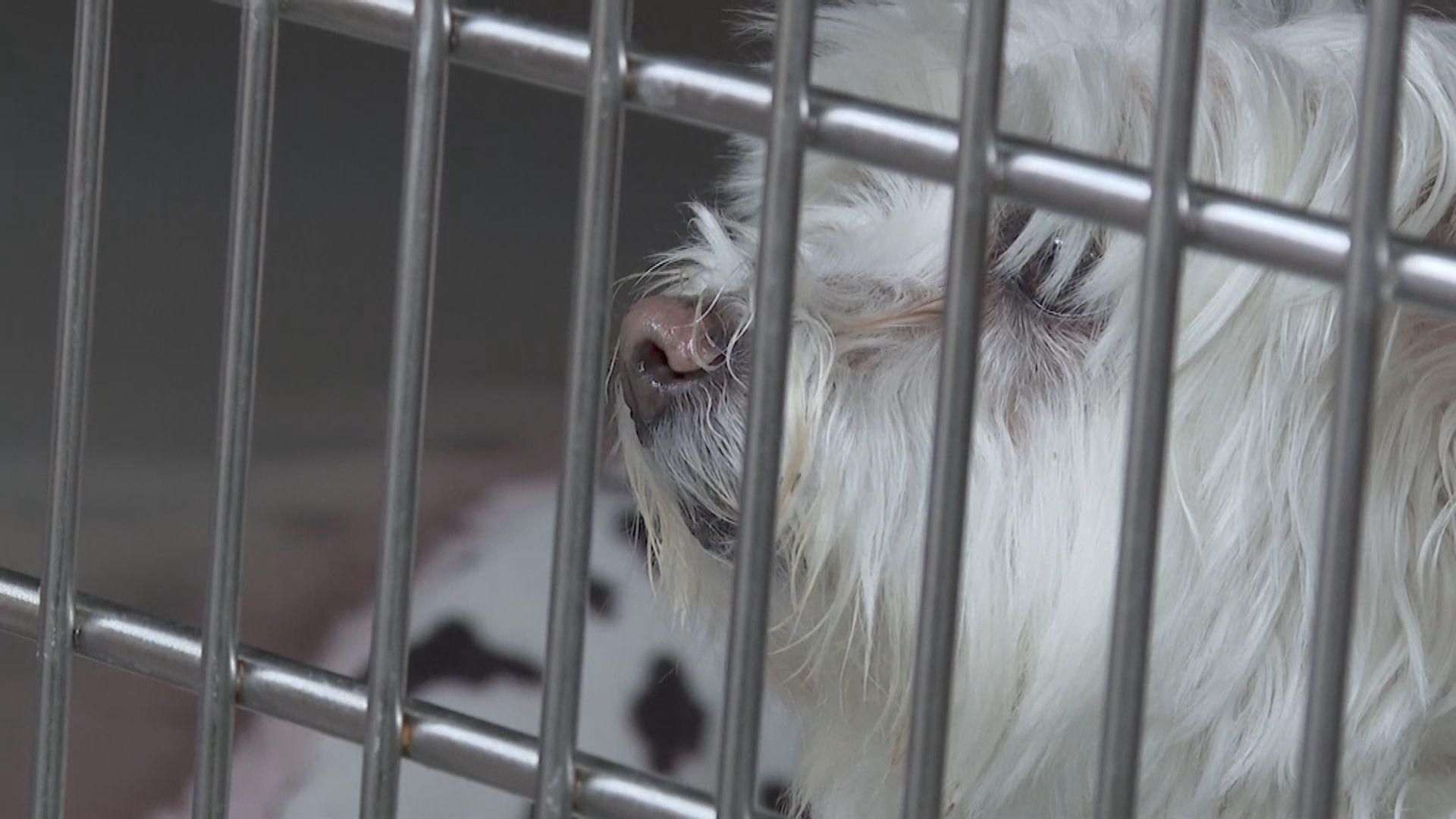 【環球薈報】美國7月14日起暫停逾百國家的狗入境