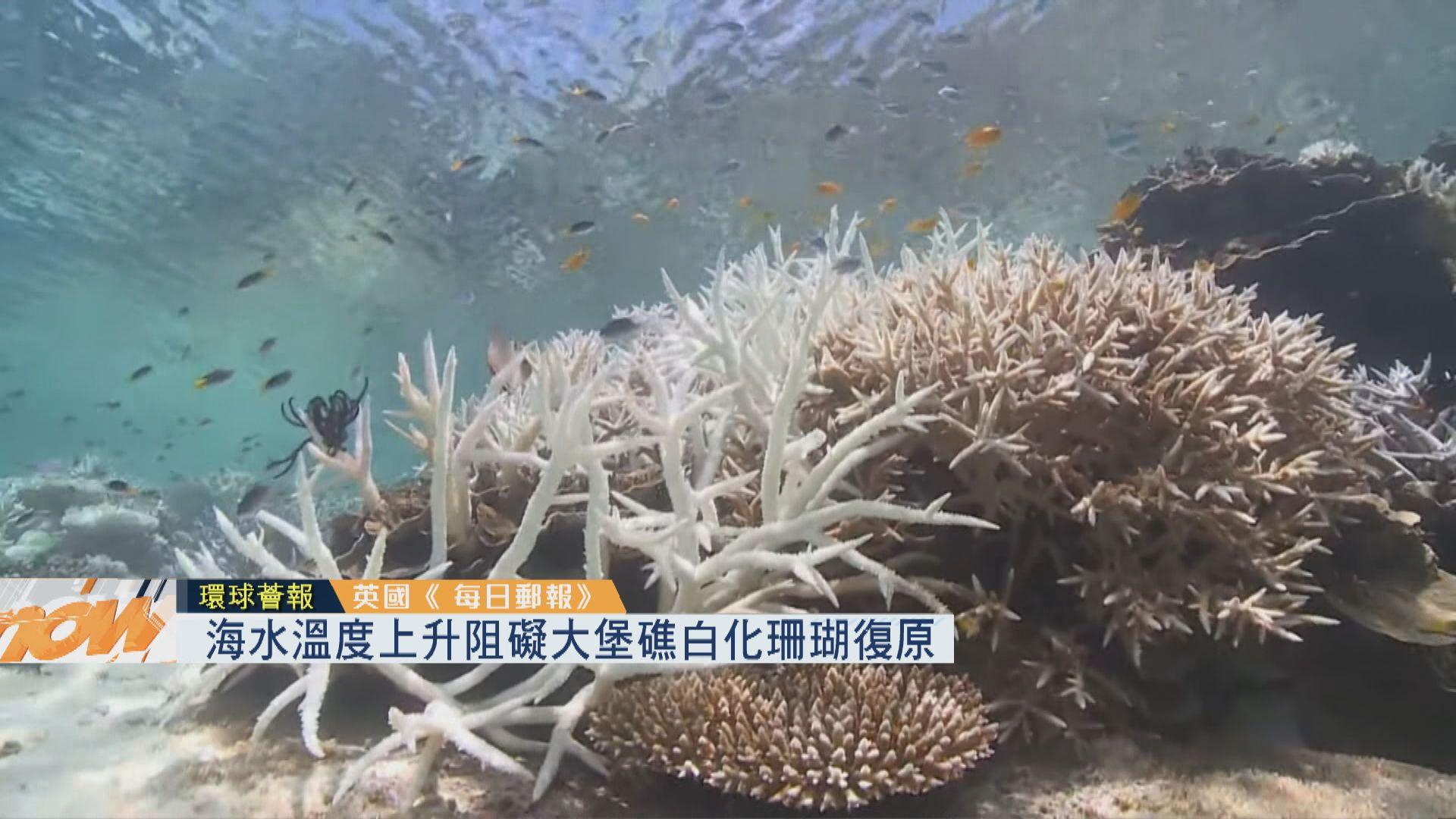 【環球薈報】海水溫度上升阻礙大堡礁白化珊瑚復原