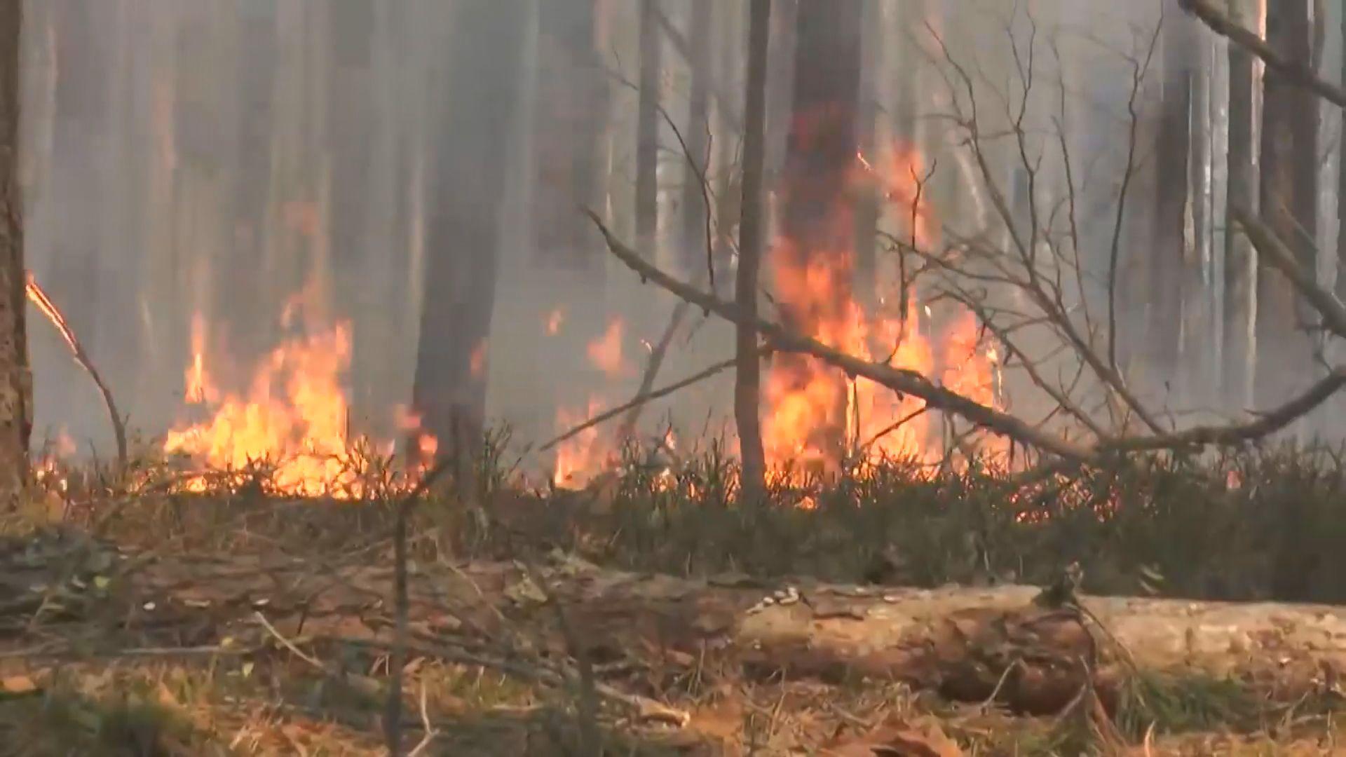 【環球薈報】烏克蘭森林大火蔓延至核電廠禁區