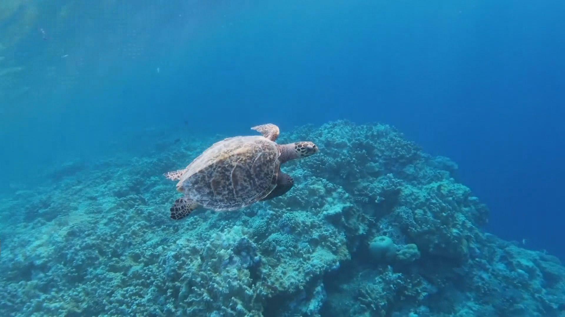 【環球薈報】研究顯示海洋酸化可致海洋生物滅絕