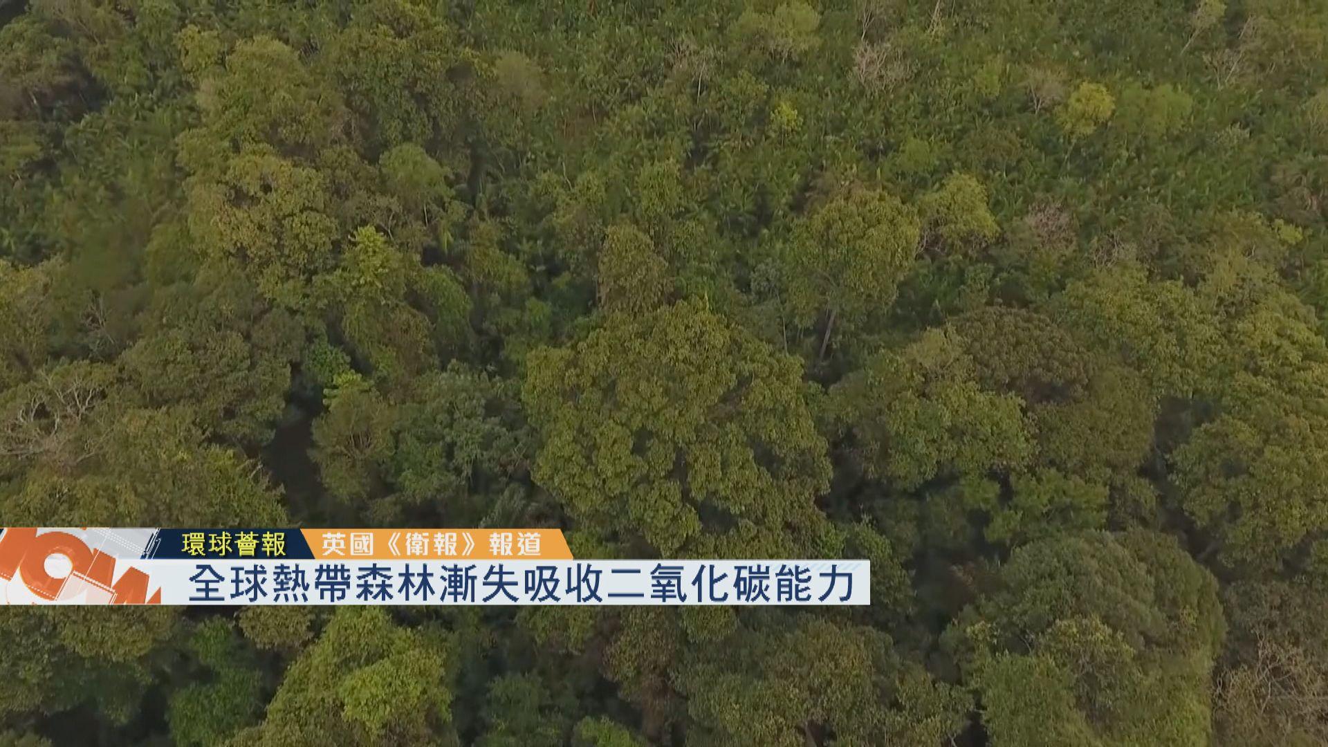 【環球薈報】全球熱帶雨林漸失吸收二氧化碳能力