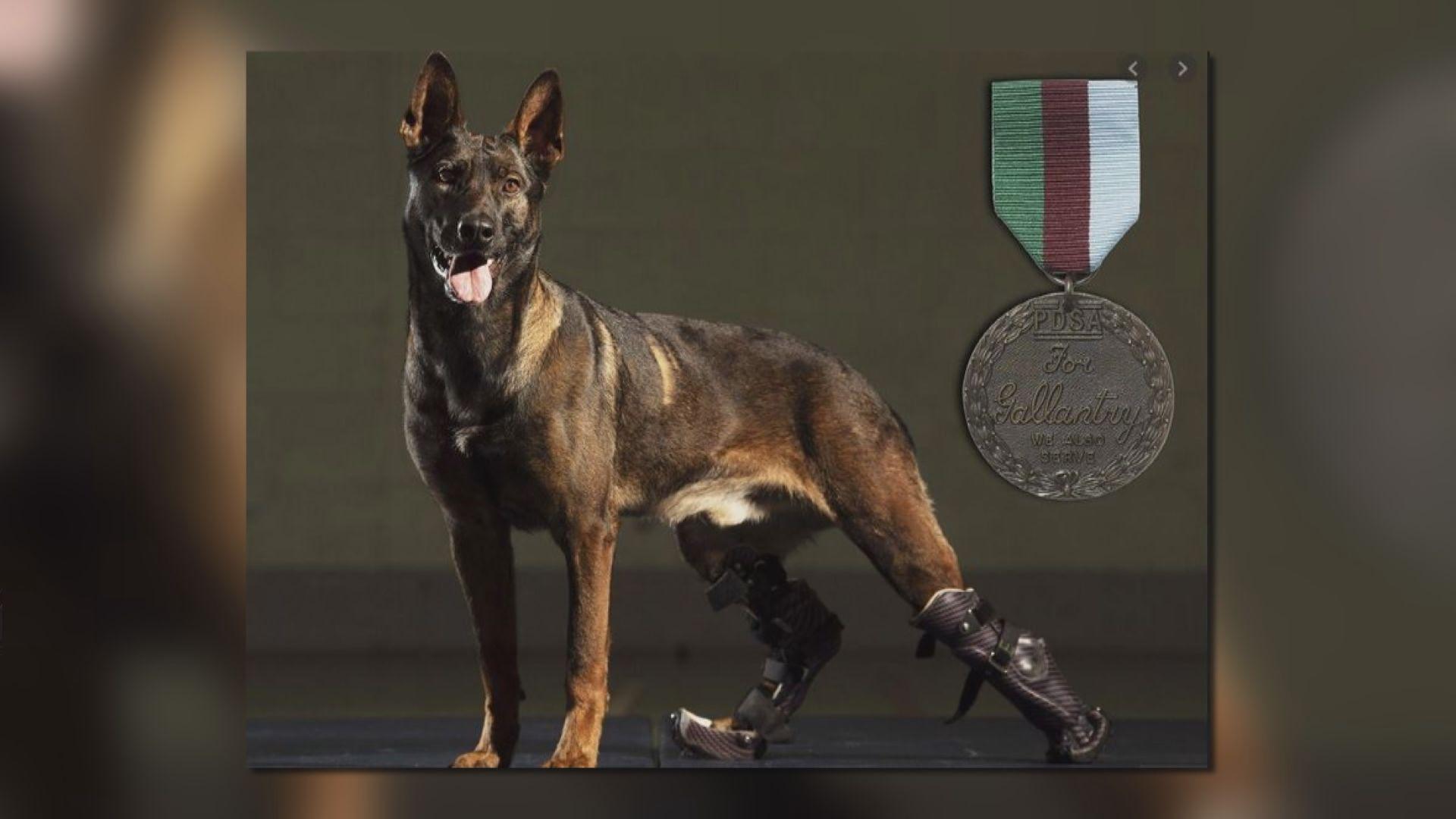 【環球薈報】英軍三歲軍犬獲頒英勇勳章
