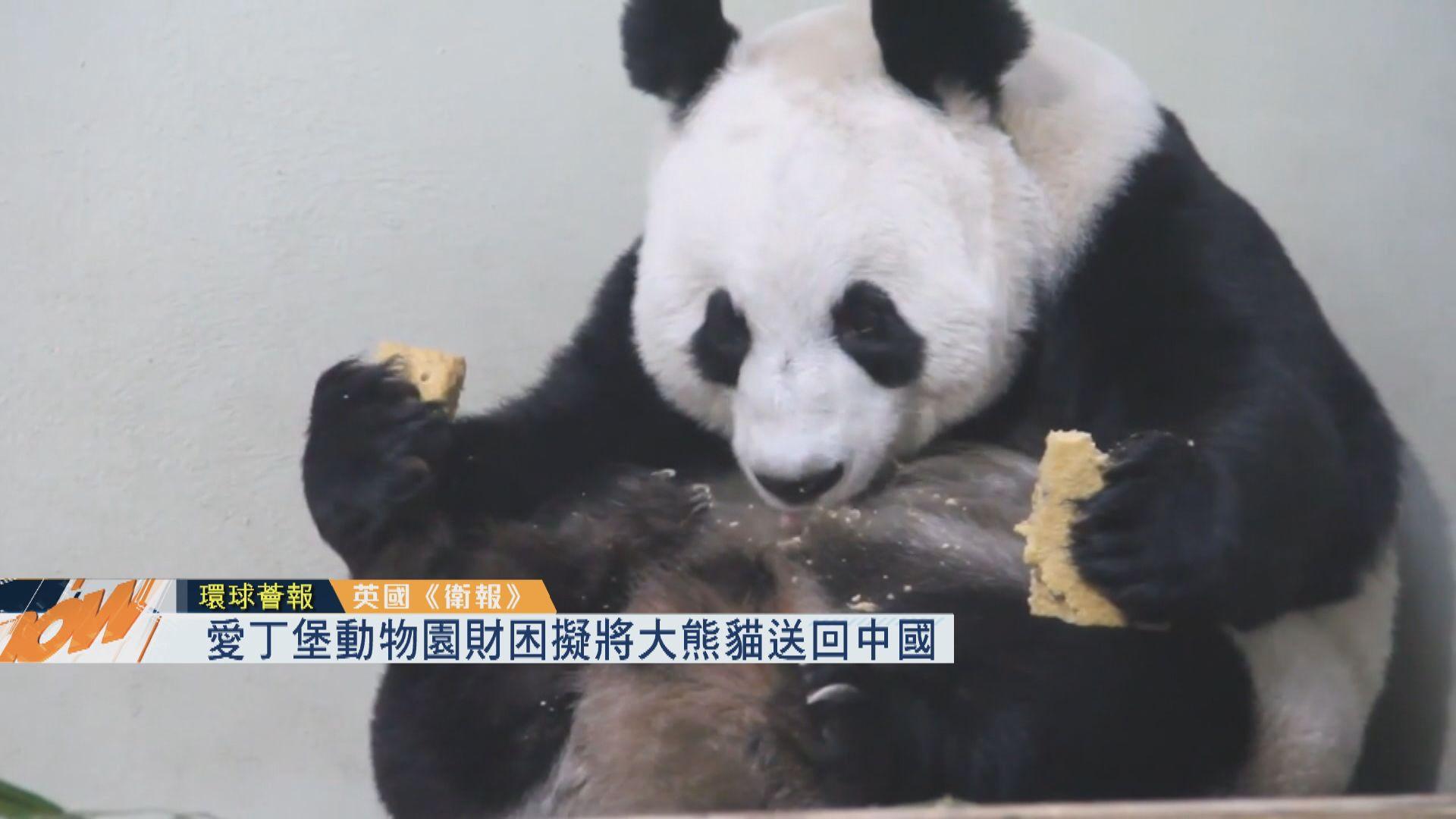 【環球薈報】愛丁堡動物園財困擬將大熊貓送回中國