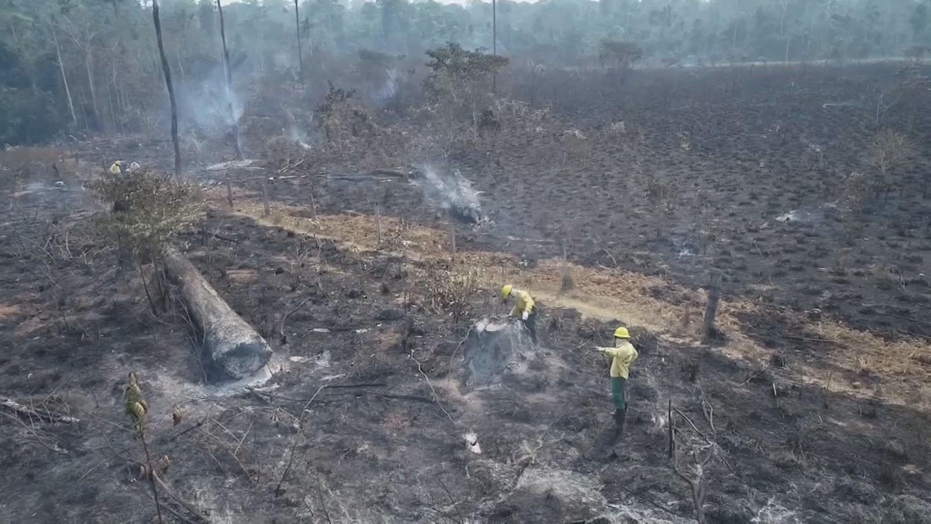 【環球薈報】亞馬遜雨林被砍伐情況十二年來最嚴重