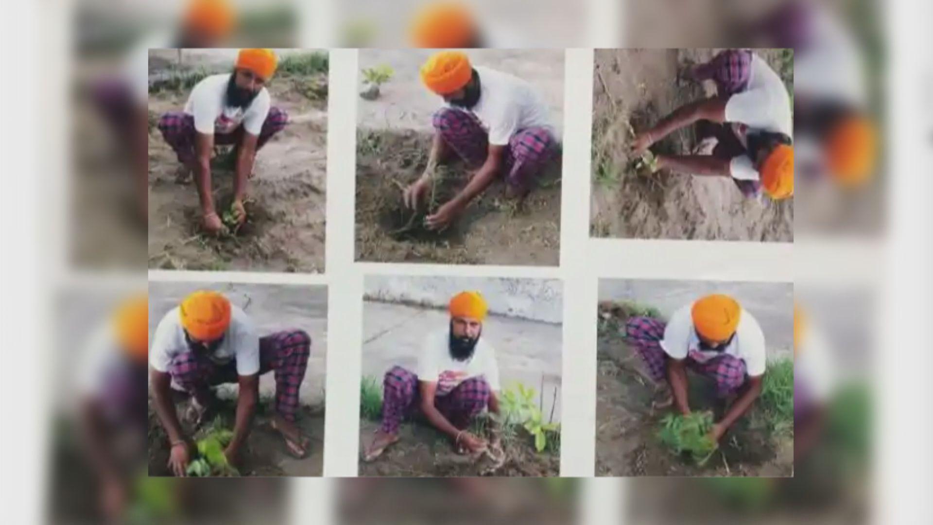 【環球薈報】印度縣市實施種樹得槍規例