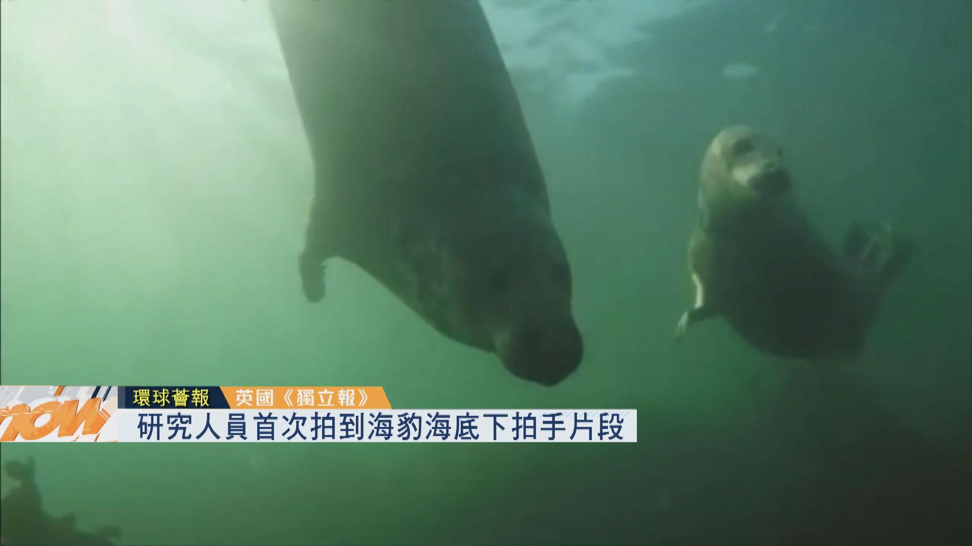 【環球薈報】研究人員首次拍到海豹海底下拍手片段
