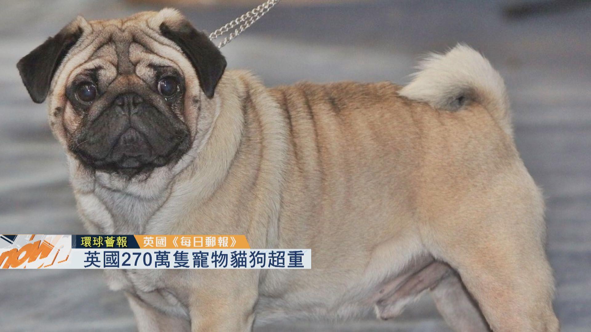 【環球薈報】英國270萬隻寵物貓狗超重