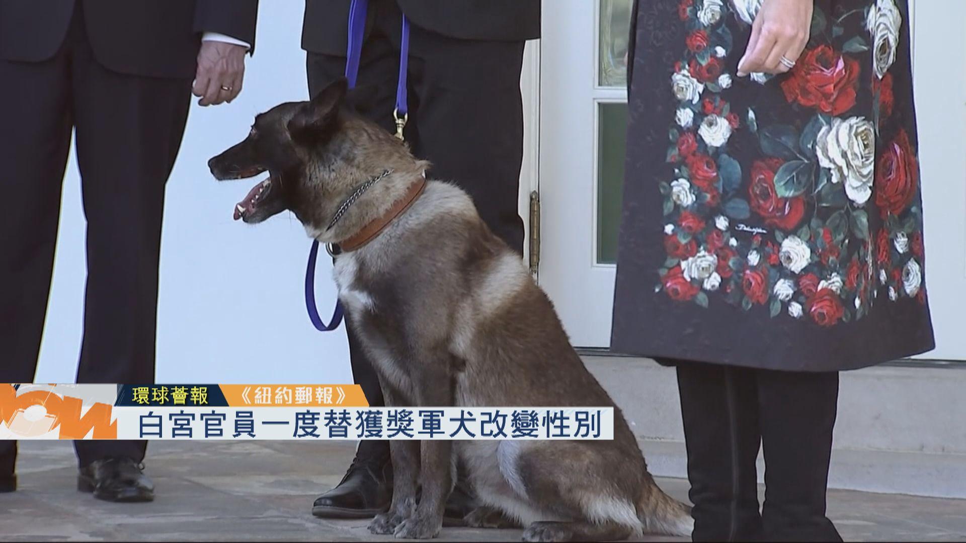 【環球薈報】白宮官員一度替獲獎軍犬改變性別