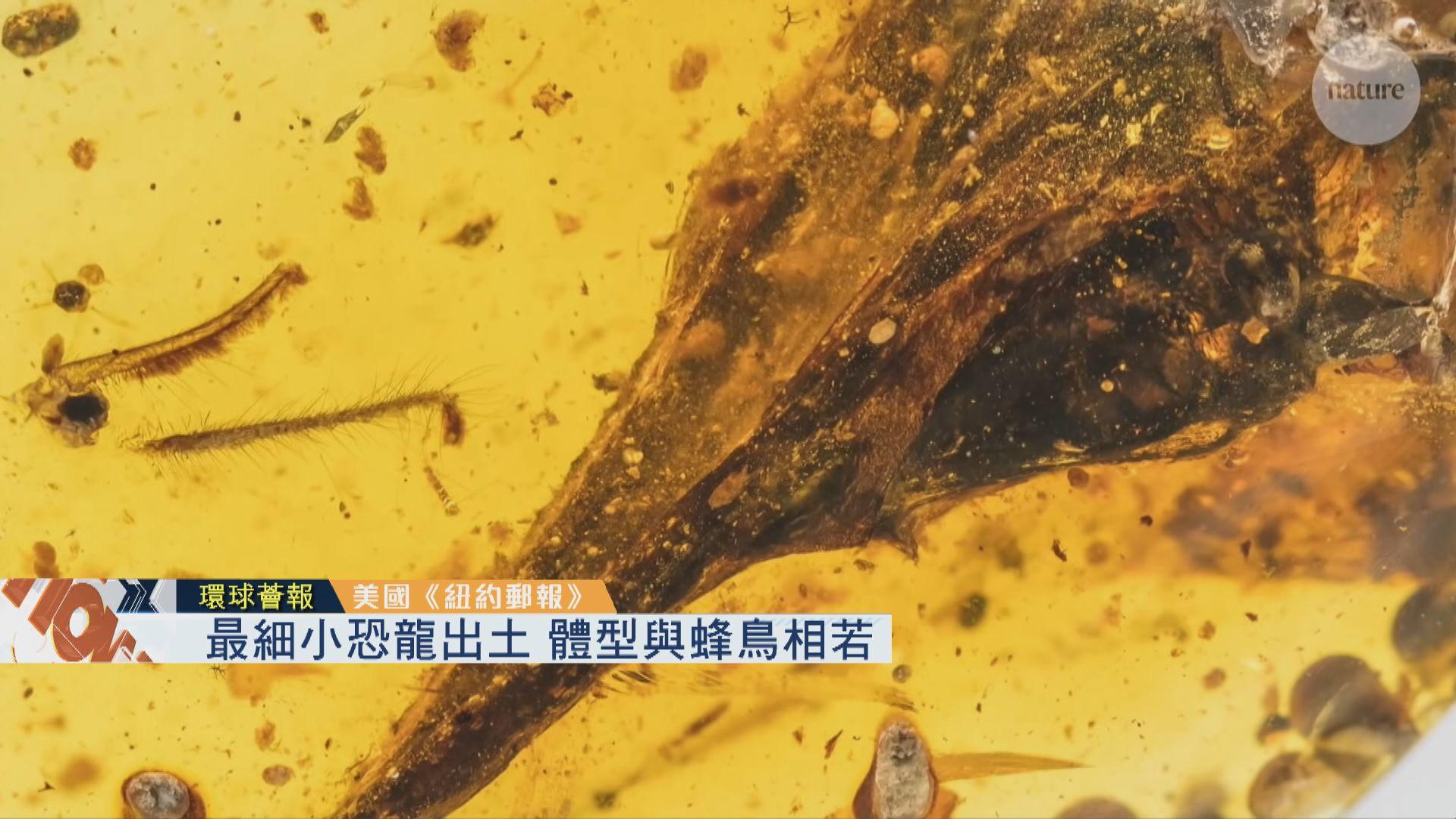 【環球薈報】最細小恐龍出土 體型與蜂鳥相若
