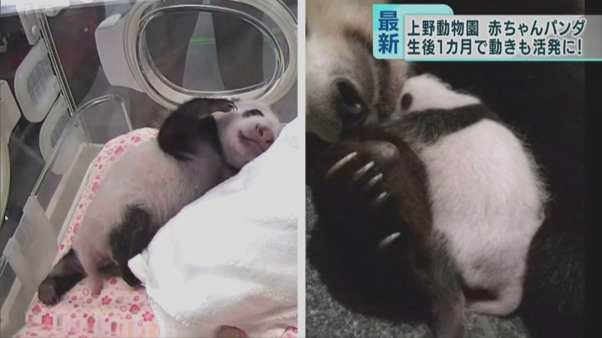【環球薈報】東京上野動物園將公開為兩大熊貓寶寶徵名