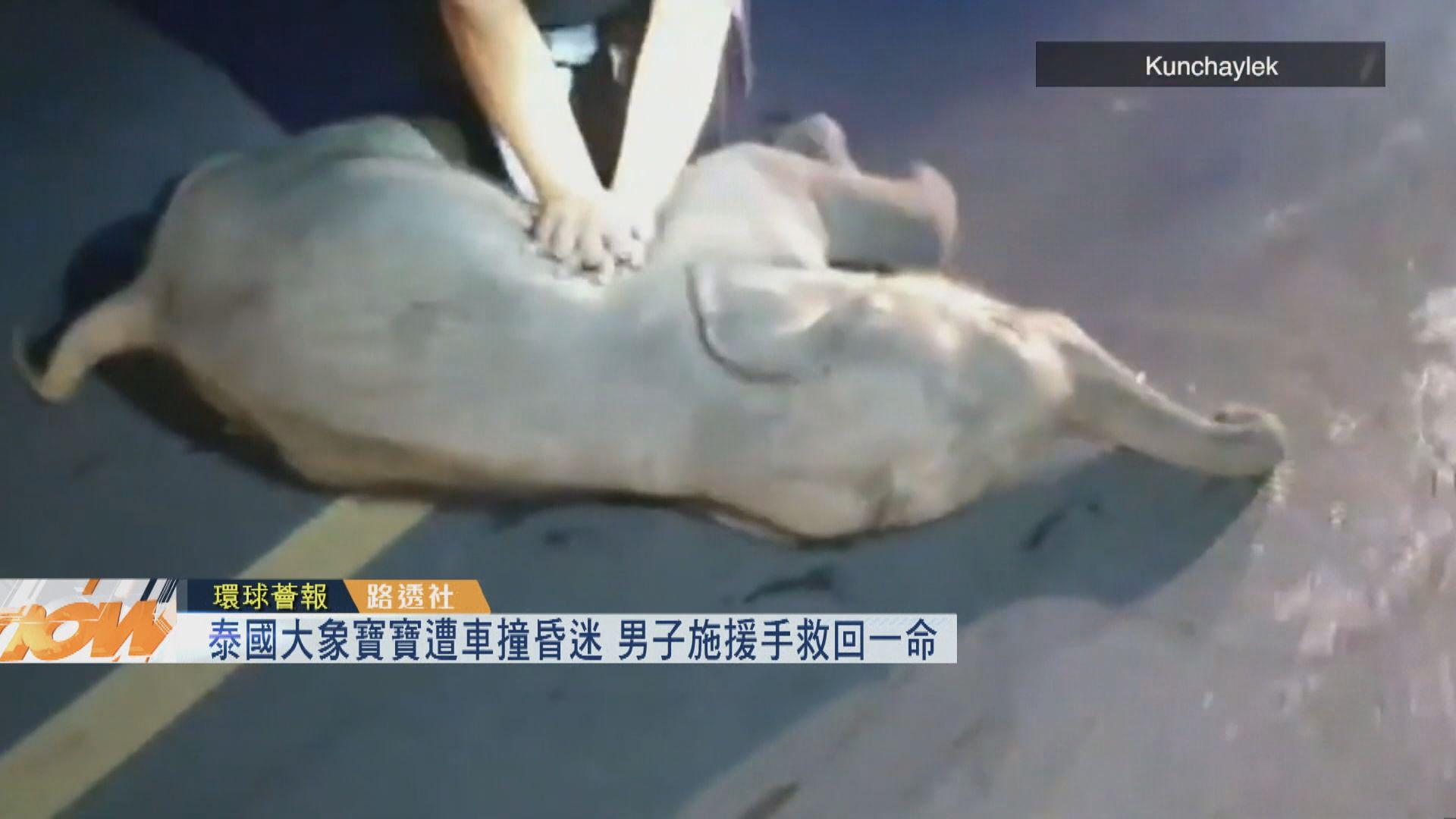 【環球薈報】泰國大象寶寶遭車撞昏迷 男子施援手救回一命
