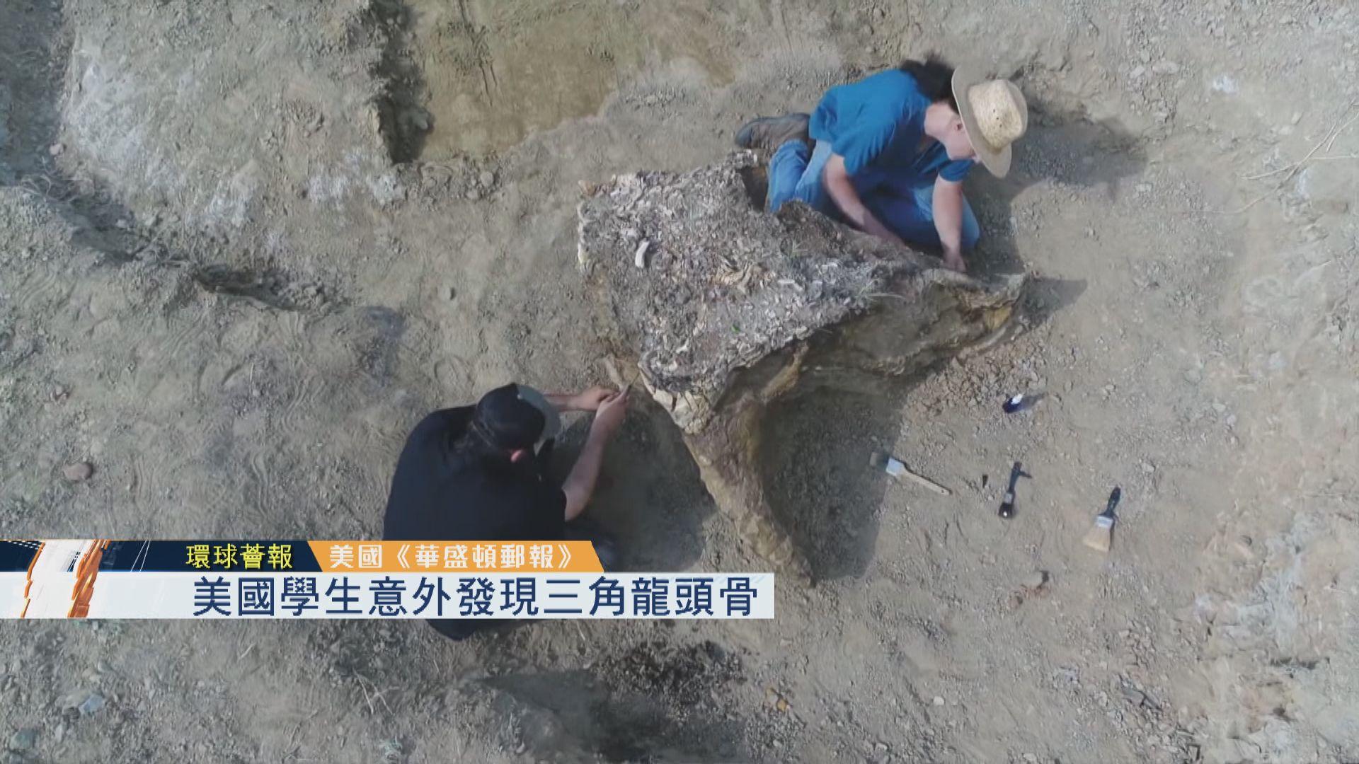 【環球薈報】美國學生意外發現三角龍頭骨