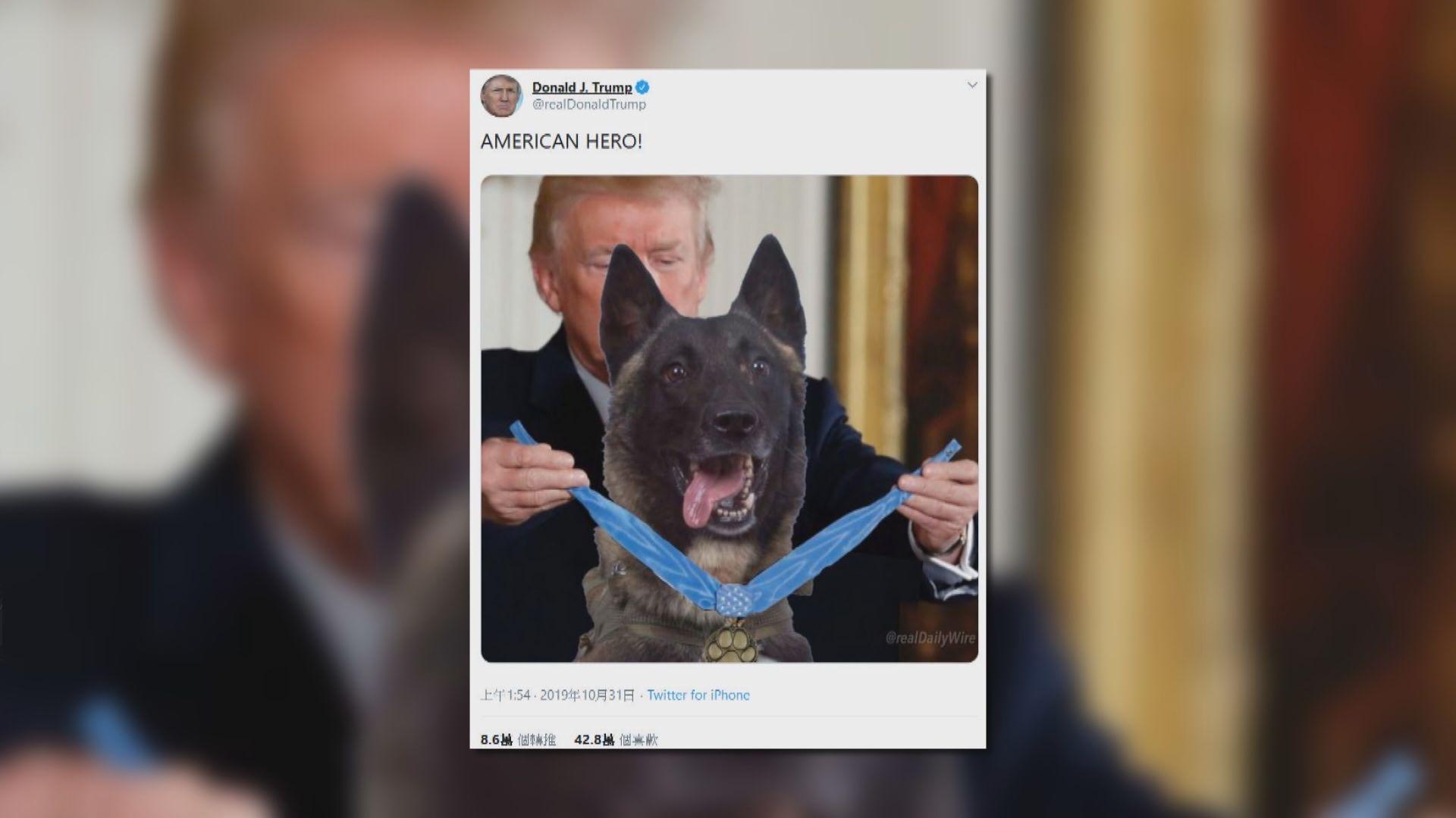 【環球薈報】特朗普發放向軍犬頒發勳章「假照片」