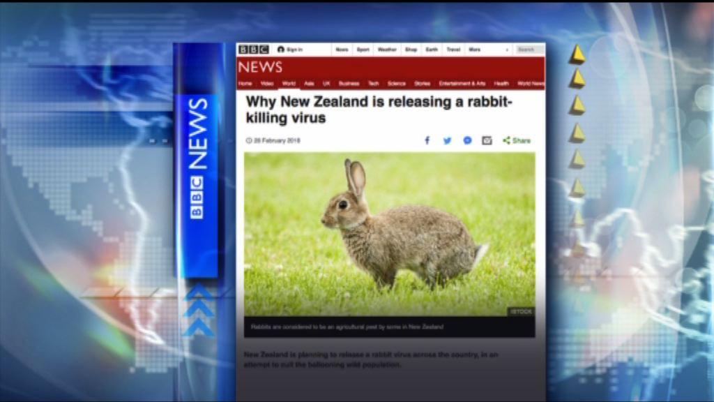 【環球薈報】新西蘭本月起全國毒殺野兔
