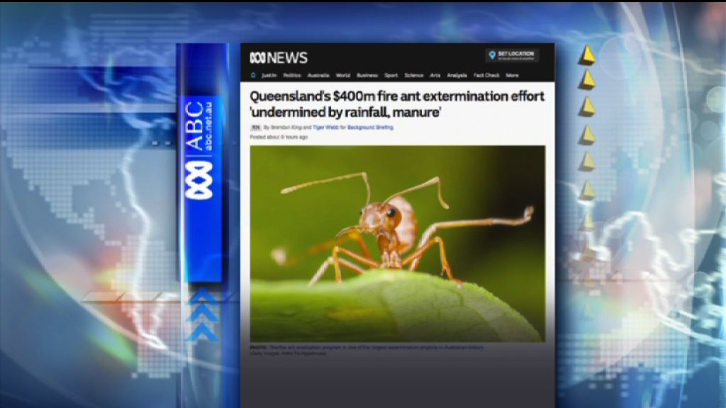 【環球薈報】錯用蟻餌滅紅火蟻 澳洲隨時白花四億