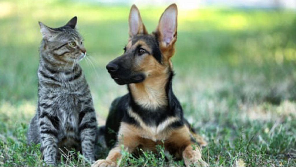 【環球薈報】美國專家指狗比貓聰明逾兩倍