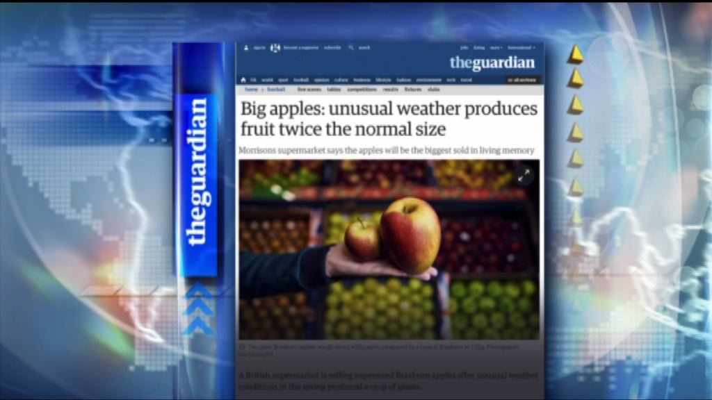 【環球薈報】英年初寒冷天氣造就大批巨型蘋果