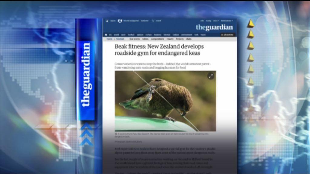 【環球薈報】新西蘭為獨有鸚鵡設路邊健身設施