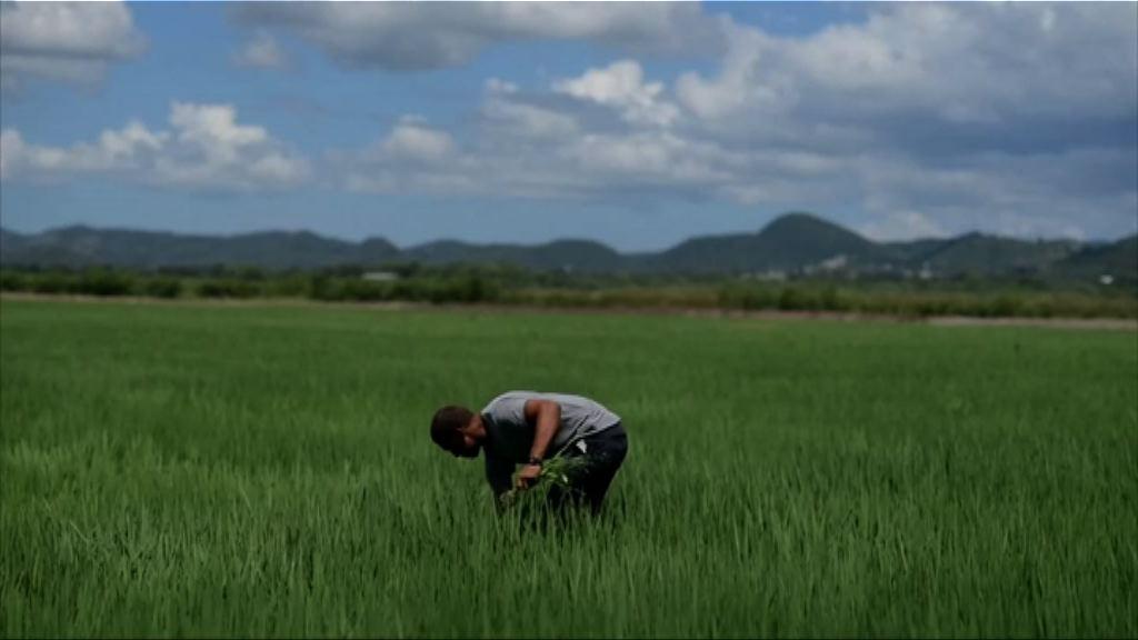【環球薈報】科學研究指有機種植環保不足