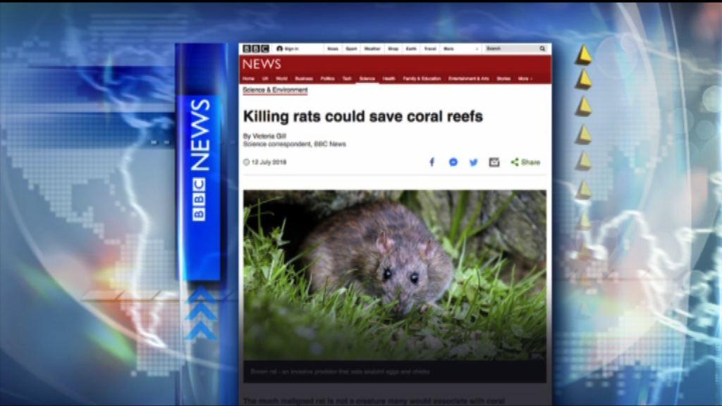 【環球薈報】研究指老鼠數目影響珊瑚礁生長